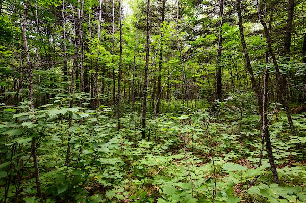 A dense woodland